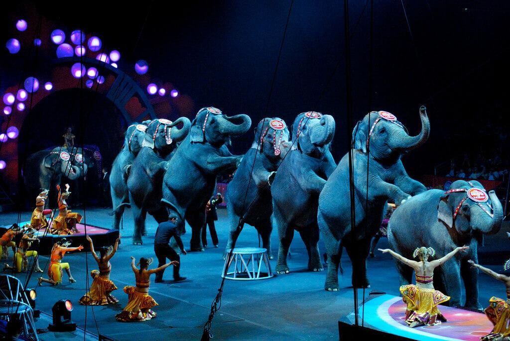 ringling-circus-sad-show