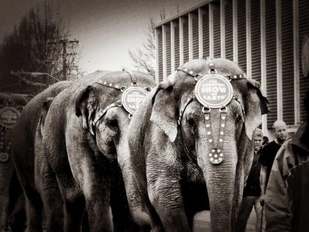sad-ringling-elephant