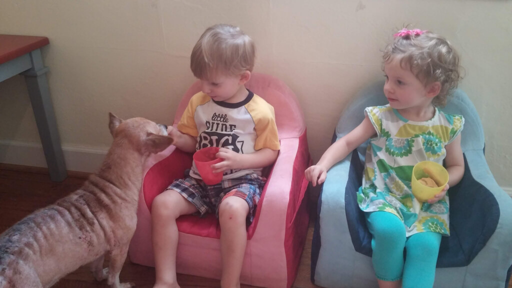 Boss the Chihuahua with Foster Family