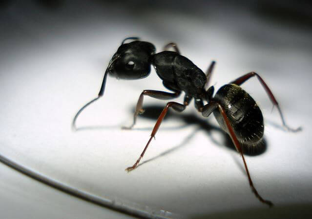 Tips for humane nontoxic ant control peta ant ccuart Images