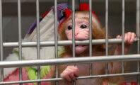 Congress Puts Cruel Monkey Experiments Under the Microscope