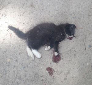 Dying Kitten Found in Virginia