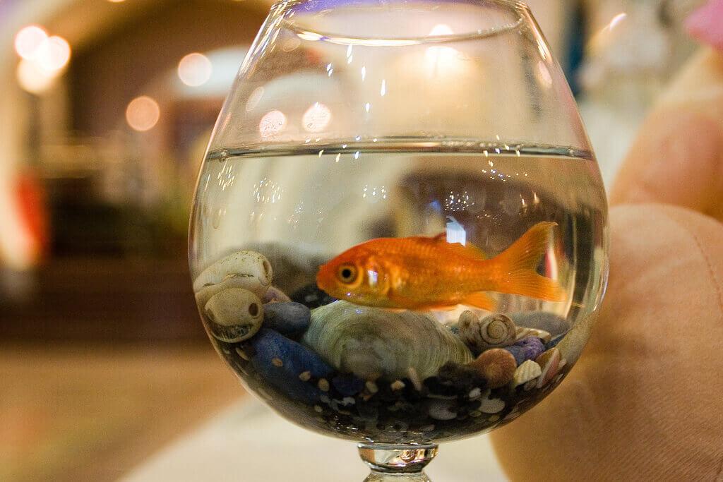 Goldfish in Glass