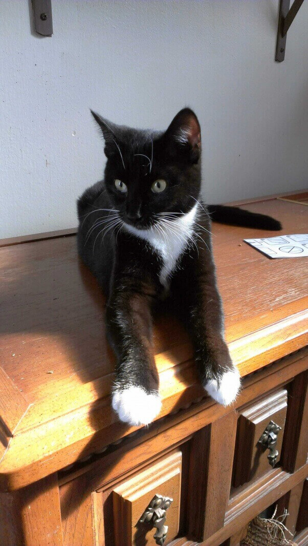 Jackie-Foster-Cat-2