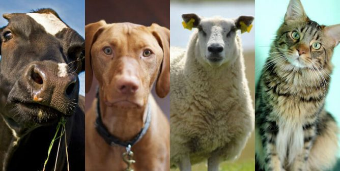 Cognitive Dissonance and How We Treat Animals (Grades 6-12)