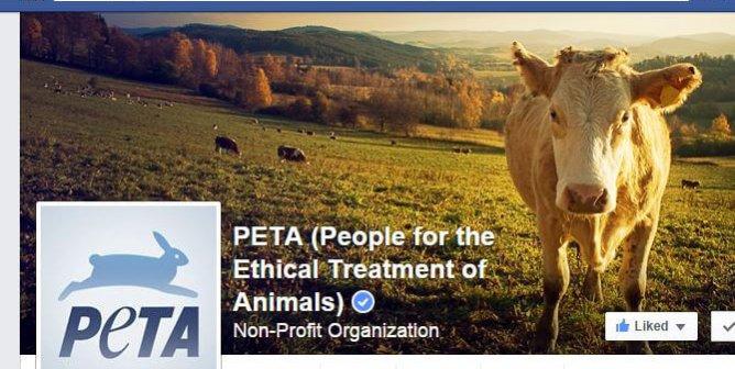 PETA's Top 7 Facebook Posts of 2014