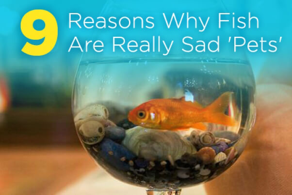 9 Reasons Why Fish Are Really Sad 'Pets' | PETA