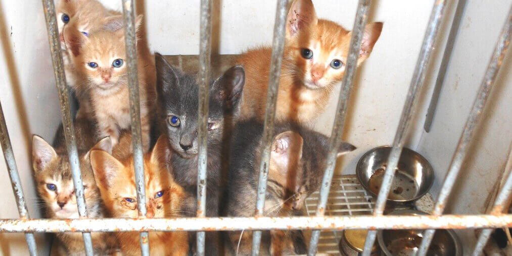 The Deadly Consequences Of NoKill Policies PETA - Take look inside one amazing cat sanctuaries world