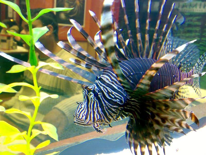 9 reasons why fish are really sad  u0026 39 pets u0026 39