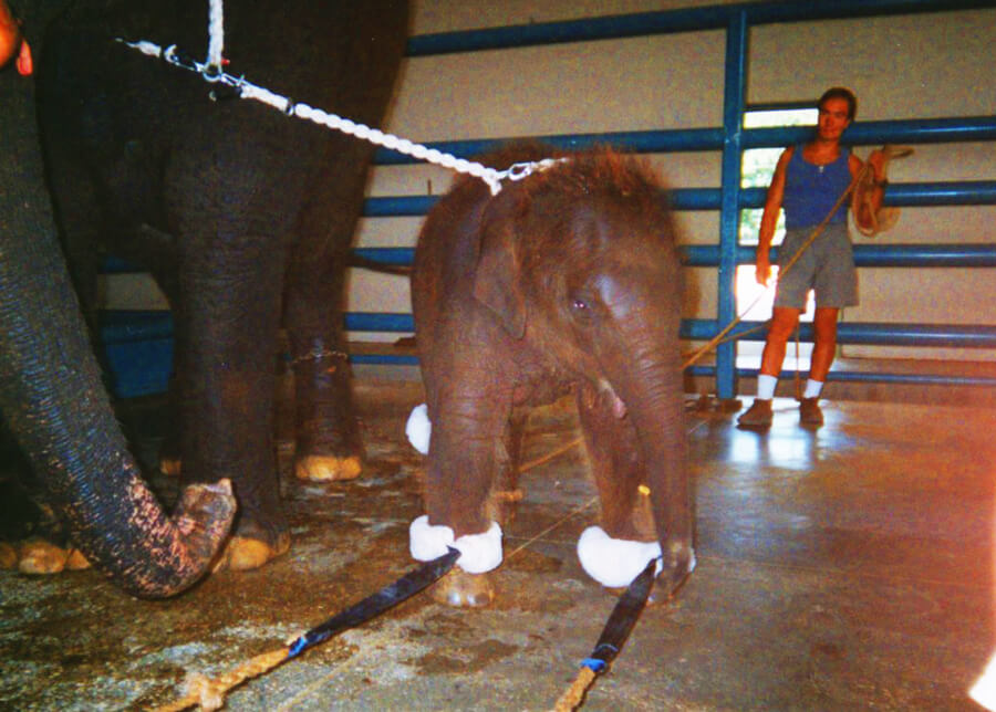 cruelty to animals at the circus