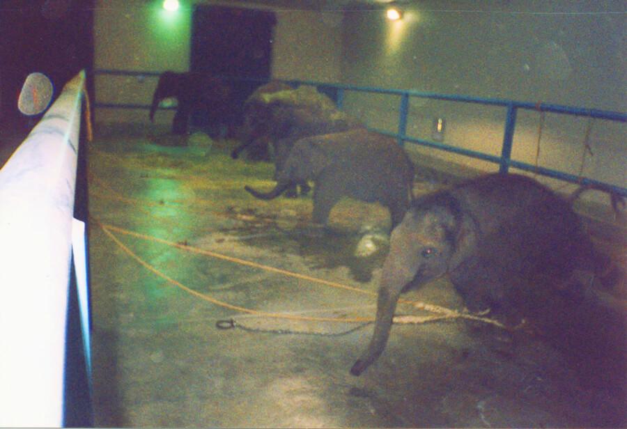Baby Elephants in Barn