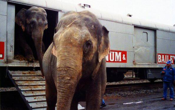 Ringling Elephant Boxcar