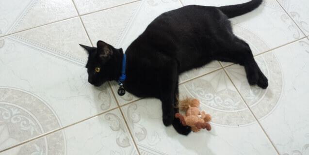 Wiz the Black Cat