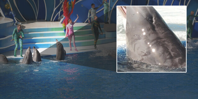 Exposed: A Veterinarian Visits SeaWorld
