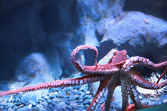 5 Times Octopuses Made Headlines | PETA