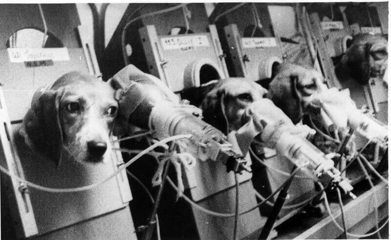 Smoke Testing on Sad Puppies