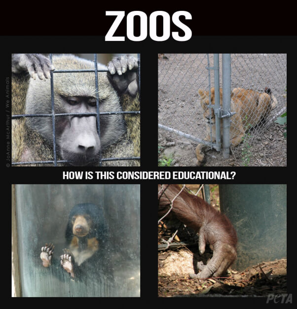 Zoos-How-Is-This-Educational-v2-PETA