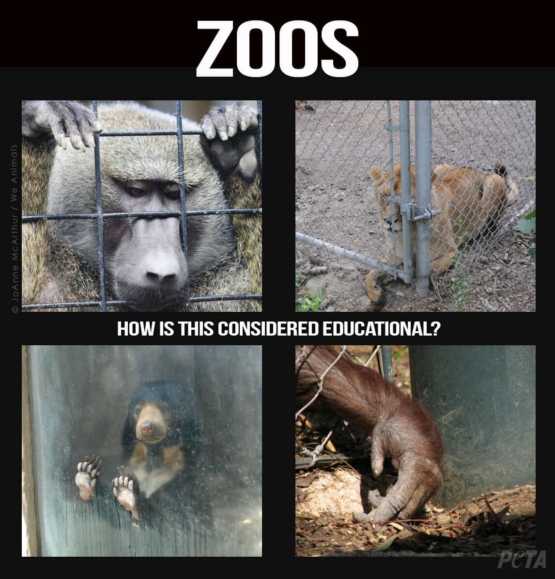 Zoos should be abolished essay   Sparks Photo Gallery We love color Persuasive essay on keeping animals in zoos