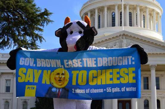 'Cow' at California Capitol