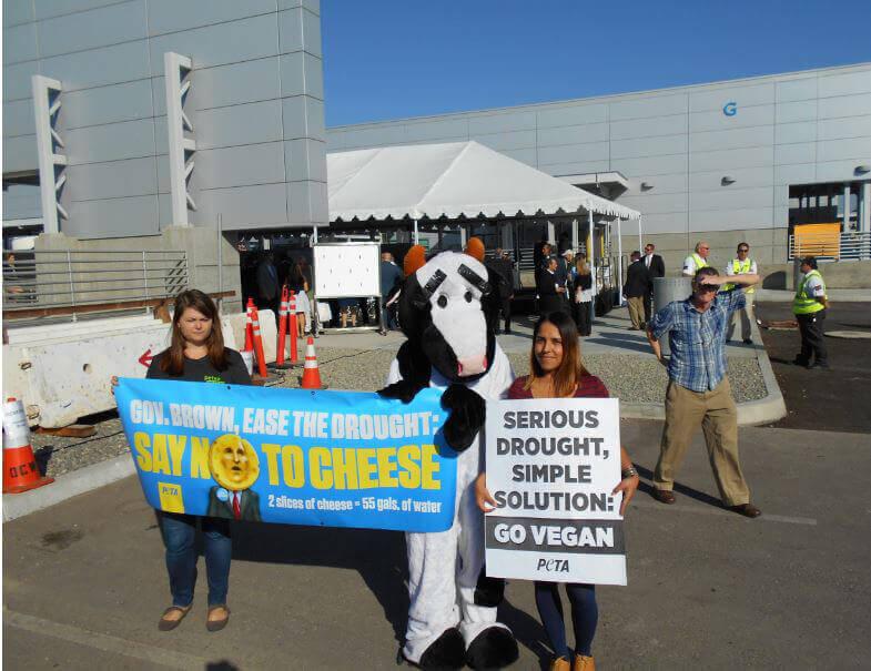 Dairy Demo