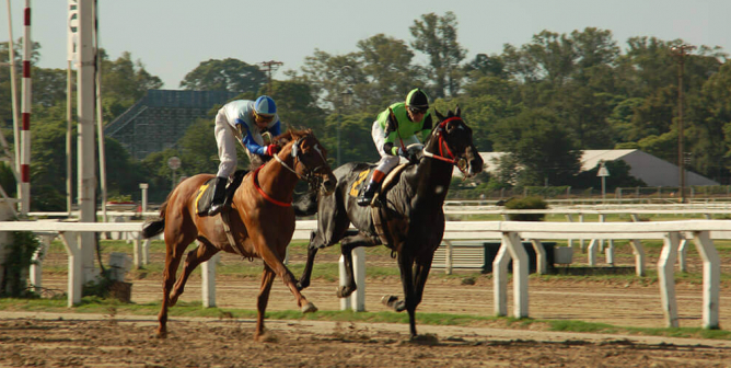 Racetrack Ignores Risks, and Horse Dies
