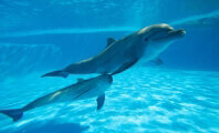 Captive Dolphins Need a Full, Rich Social Life