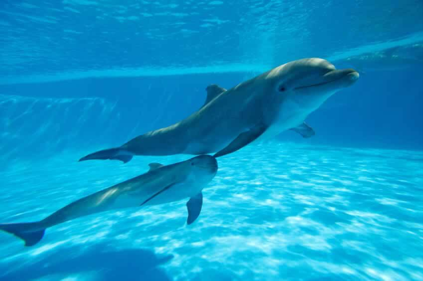 "dolphin captivity research paper But they are more disturbed by marino, now fighting dolphin captivity on a global scale marino has many indisputable points, including her concern over the growing number of ""dolphin-assisted therapy"" (dat) centers worldwide."