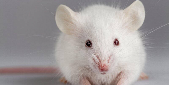 An Equation Could Save 5,000 Animals' Lives Every Year