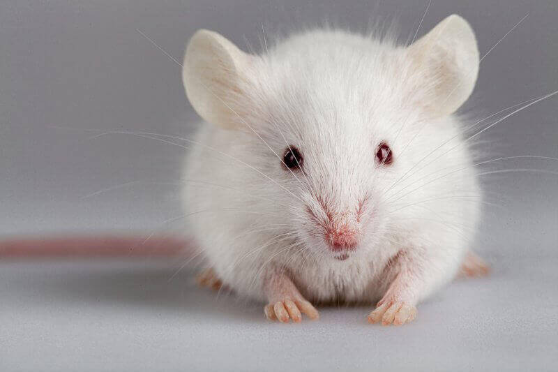 Cutting-Edge Toxicology Testing Doesn't Involve Animals