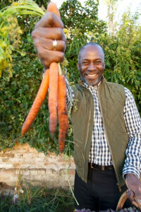 Man Holding Bunch of Carrots