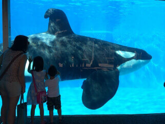 Live-Tweeting SeaWorld of Hurt