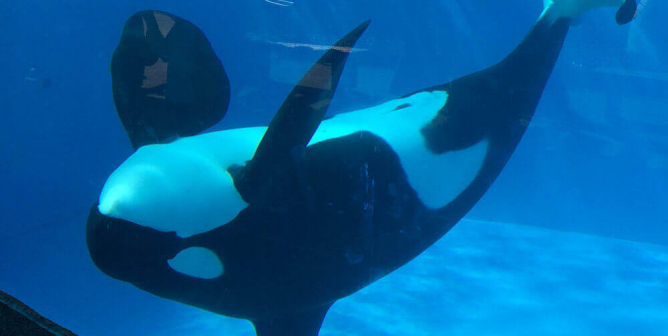 Ask SeaWorld to Release Its Prisoners!