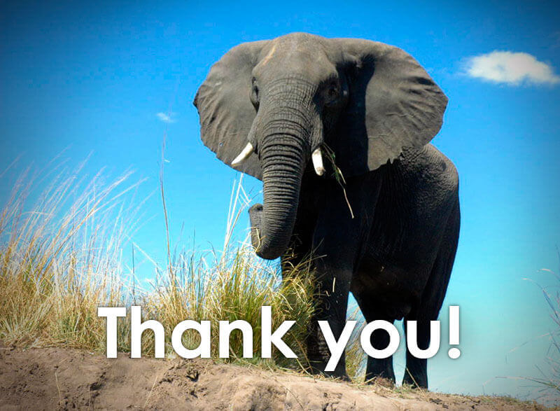 thank you elephant - Asian Wedding Entrance Songs