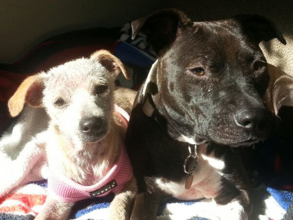 Rescued Puppy Gabe With Friend at Foster Home