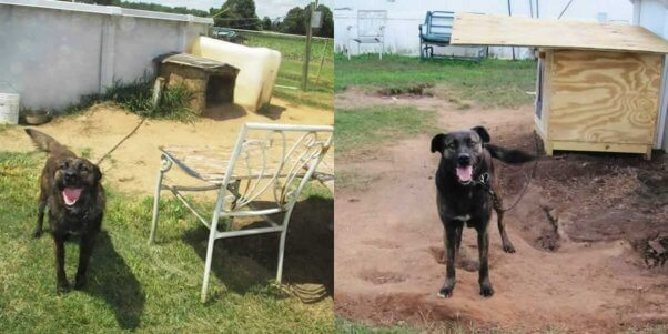 Ace Before and After Doghouse Delivery