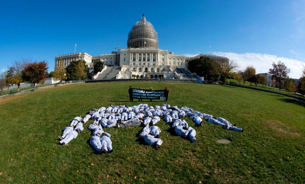 USDA Elephant Demo
