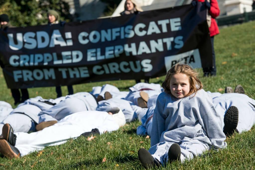 USDA Elephant Demo 2
