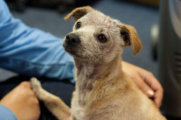 Rescued Puppy Gabe