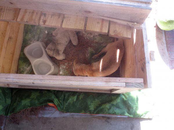 Gabe Living in a Box