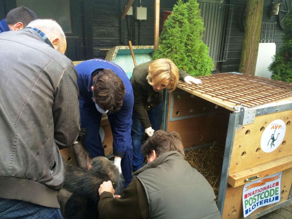 PETA Germany Chimpanzee Rescue in Progress
