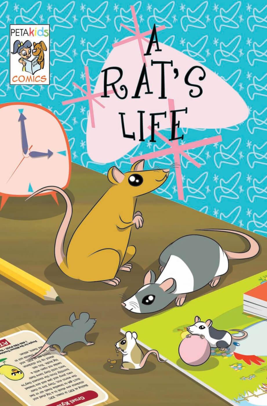 a rat 39 s life peta. Black Bedroom Furniture Sets. Home Design Ideas