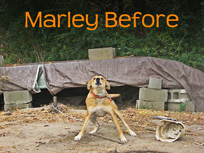 Chained Dog: Marley Before