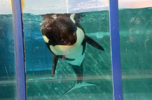 Sad Orca