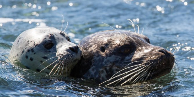 Other Animals Have Their Own '911' Code