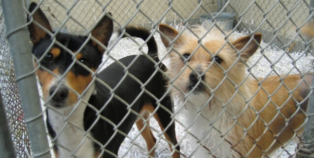 two small dogs looking out of cage