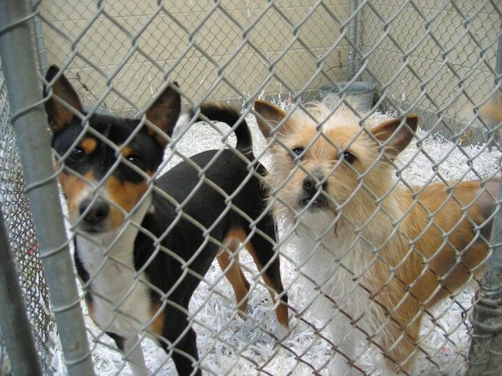 8 Reasons to Adopt—Not Buy—Dogs | PETA