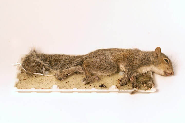 Ask Dollar Tree Canada and Family Dollar to Stop Selling Glue Traps!