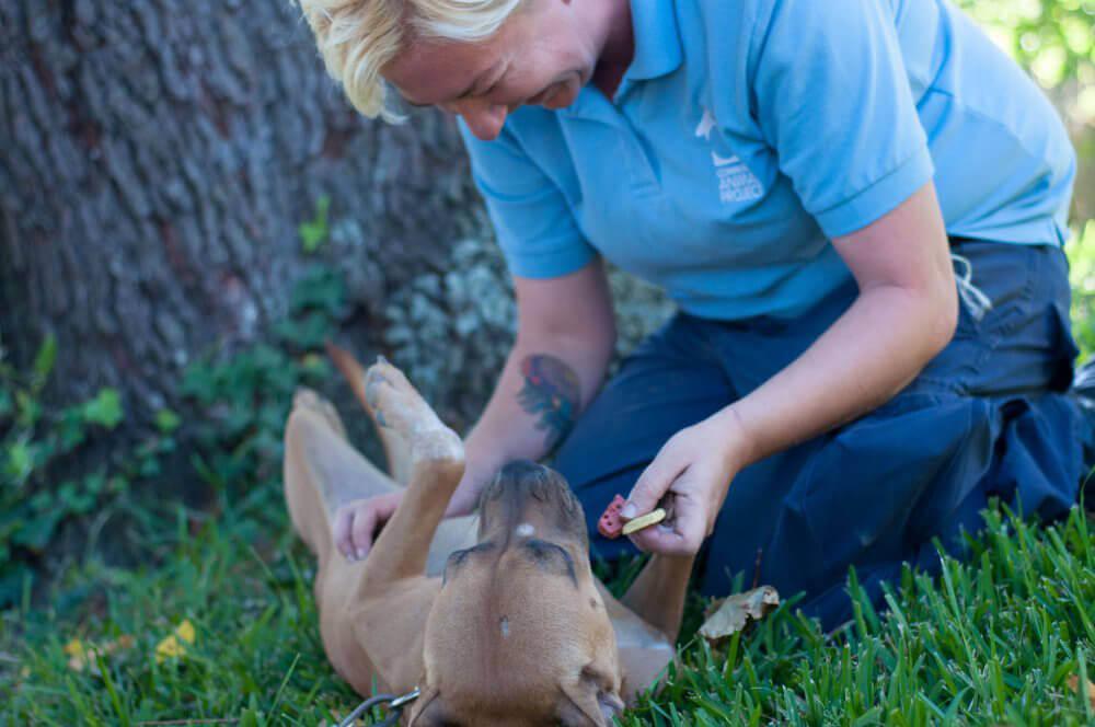PETA Staffer With Dog