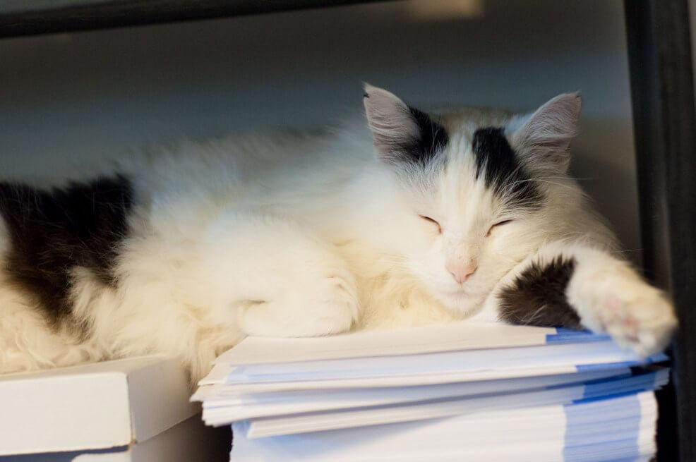 Black and White Cat Sleeping