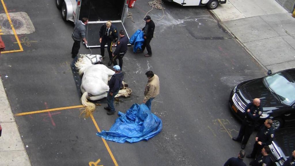 Horse Dead on the Street